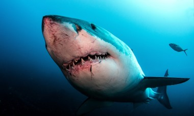 craziest-shark-attack-survival-stories