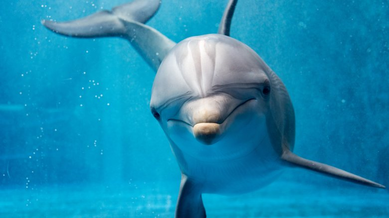 Are dolphins really so smart? (Cool dolphin facts)