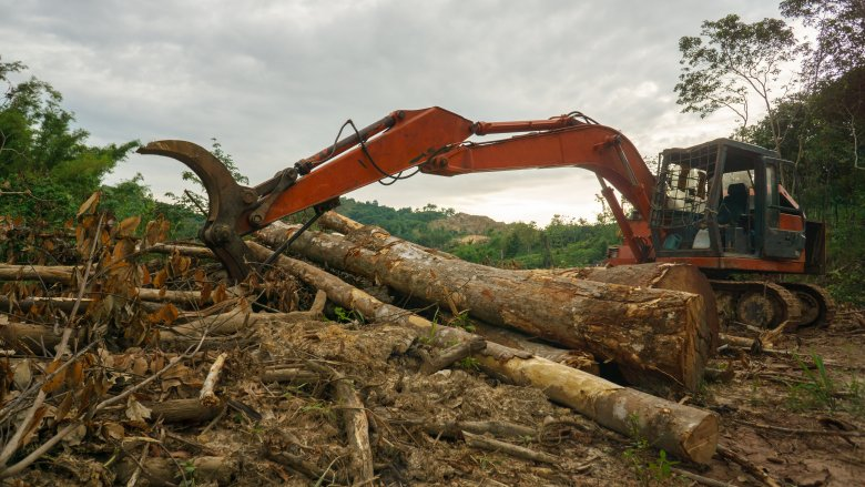 Clear cutting forest
