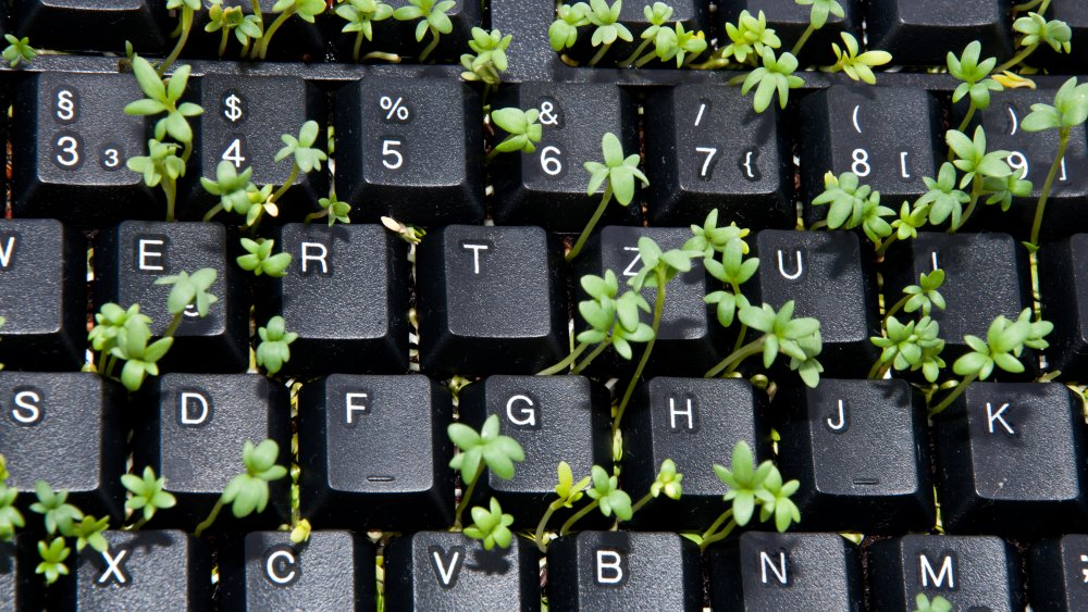 Plant with keyboard