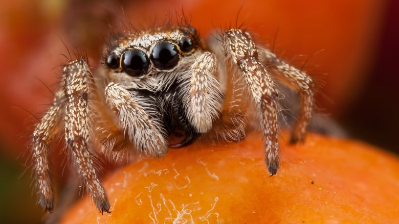 Spider on fruit