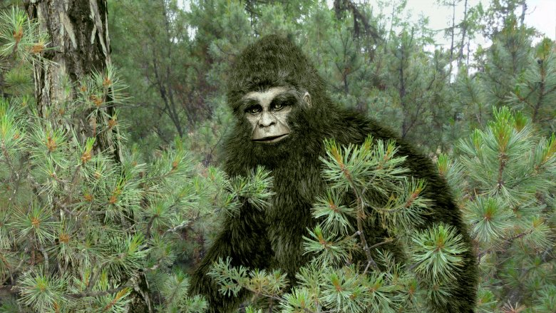 the bizarre true story of bigfoot the apeman