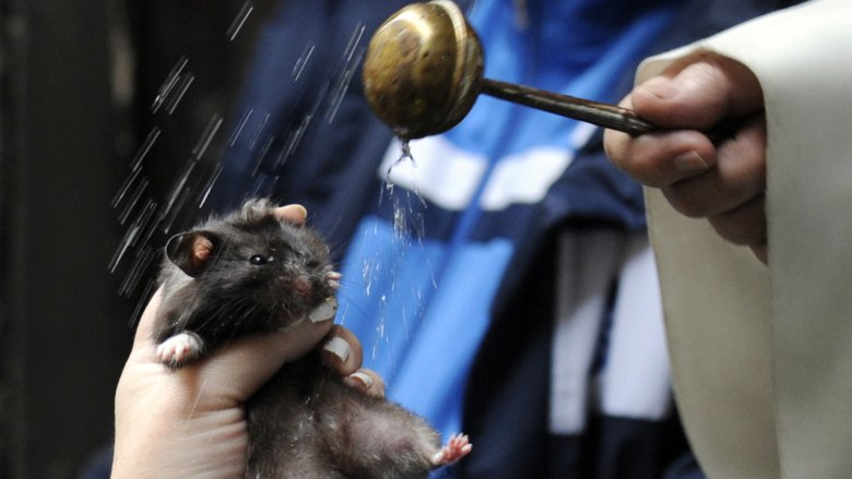 priest blessing hamster