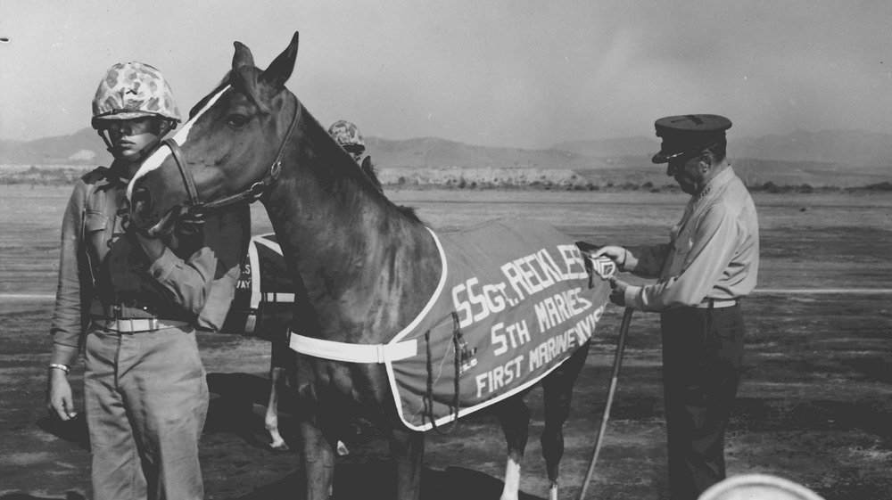 Sergeant Reckless getting promoted to staff sergeant