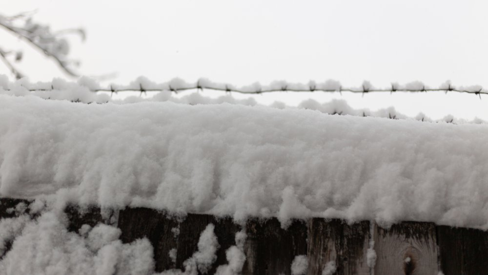 Snow covered bard wire