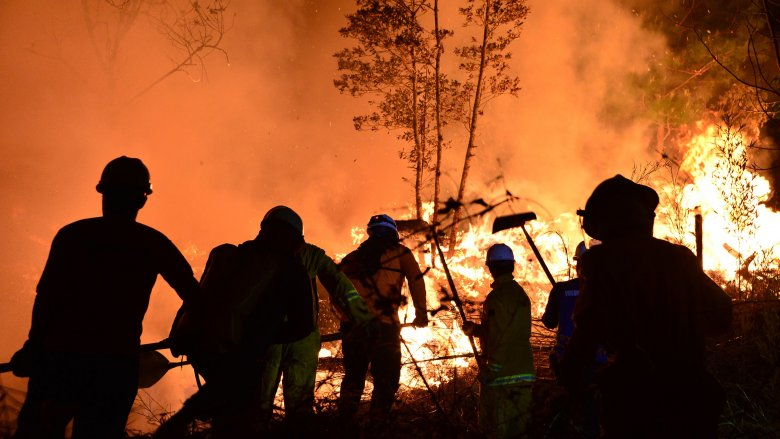 The most destructive wildfires in history