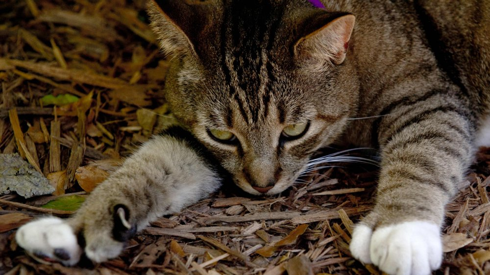 The Six-Toed Cats at the Hemingway House