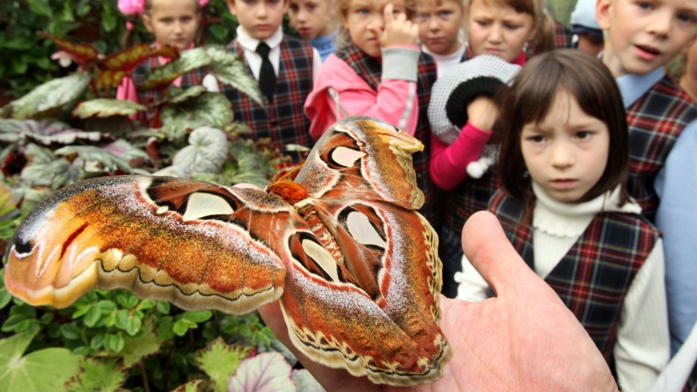 atlas moth, w/ child on right comprehending death for the first time