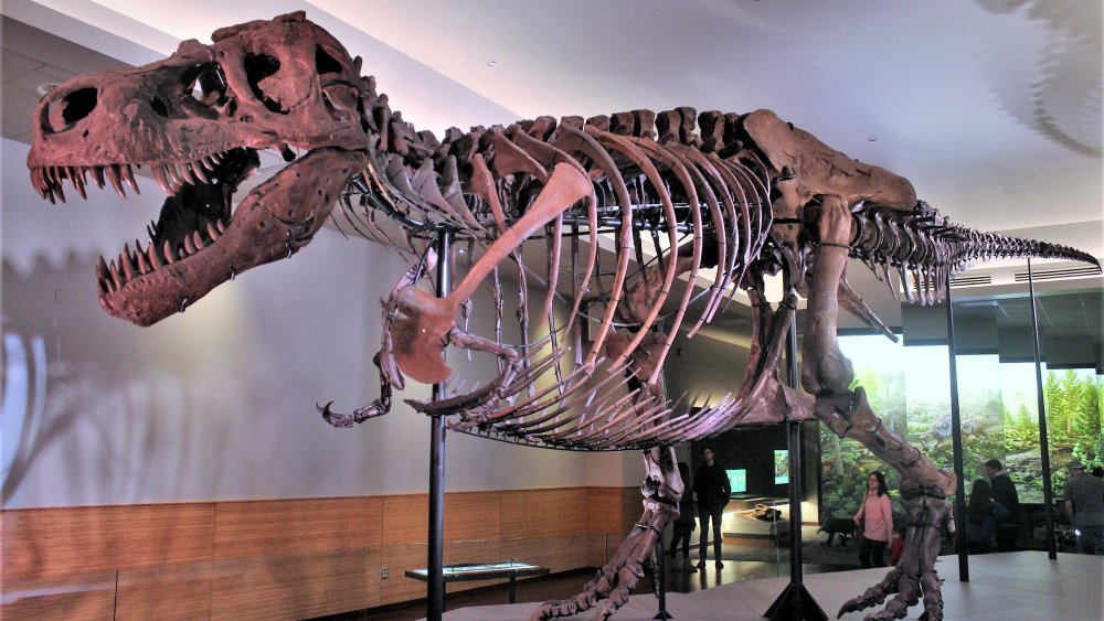 Sue the T-Rex in the updated suite in the Field Museum in 2018