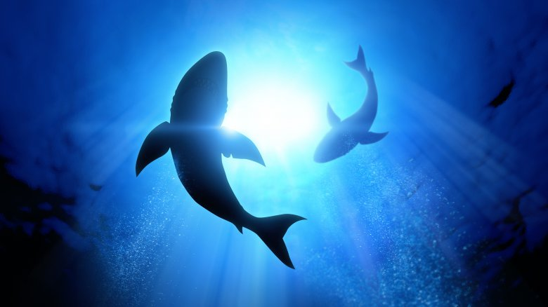 What would happen if sharks went extinct?