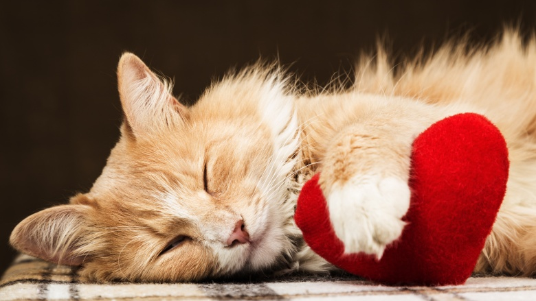 The real reason why cats purr and other feline facts