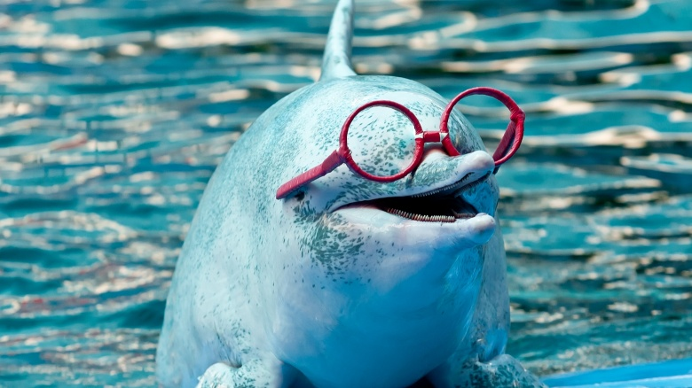 Are Dolphins Really So Smart Cool Dolphin Facts
